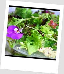 Blattsalat Frühlingssalat